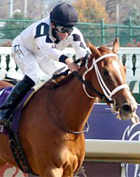 Odds to win the 2007 Breeders Cup Juvenile