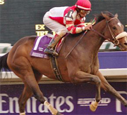 2007 Breeders Cup Distaff betting odds