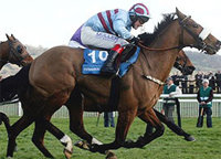 2008 Champion Hurdle: Sizing Europe, Sublimity and Osana favourite