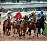 horse racing essay