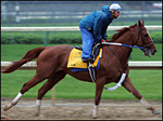 Who won the Preakness Stakes - Curlin