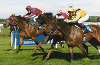 Horse racing at Haydock, Beverley, Stratford and more