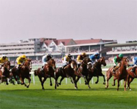 Horse racing at Haydock, Newmarket and Stratford
