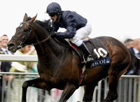 Royal Ascot Gold Cup contenders and betting odds